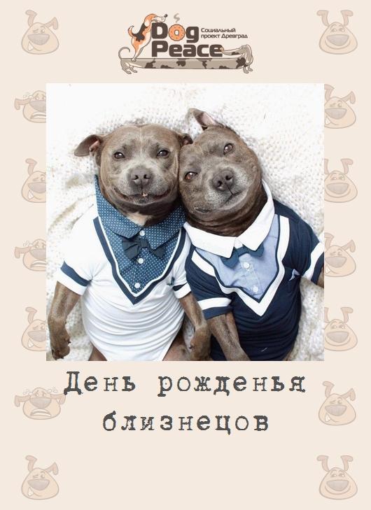 Открытка с днем рождения близнецов мужчин, картинка цветы открытка